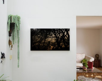 Canopy. (Canvas Print Photography)