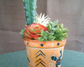 Cactus in a clay pot