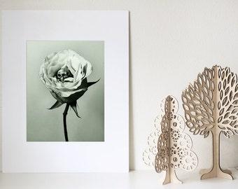 SALE Matted 11x14 Remorse Print Black White Gray Sepia Green Flower Petals Rose Skull Death Bone Still Life Surreal Creepy Wall Art Decor