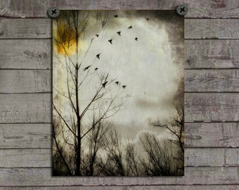 Bird Art Photo, Surreal, Trees, Distressed Archival Picture, Ravens, Crows Flying, Nature, Blackbirds, Gray Skies