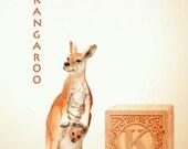 ABC art, kangaroo art, letter photo, nursery art, nursery decor, childs room decor, child room art, letter art, alphabet photo, alphabet art