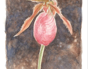 Pink laddy slipper orchid by Renae Taylor