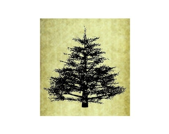 PINE TREE Rubber Stamp~Cling Stamp~Rustic Forest Evergreen Nature Illustration Mountain Christmas Spruce Large Trees Hiking Camping (54-15)
