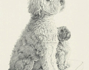5x7 Two Dog Print from original drawing
