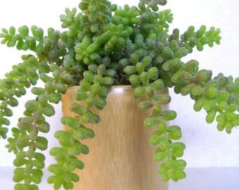 Succulent Planter, Donkey Tail Sedum Succulent Arrangement, Modern Floral Decor, Succulent Centerpiece, Indoor Plant, Faux Succulent