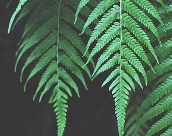 Botanical Nature Print, Nature Photography, Living Room Wall Art, Modern Fine Art Photo, Gift for Her, 8x10, 11x14, 16x20, 20x24, 24x30