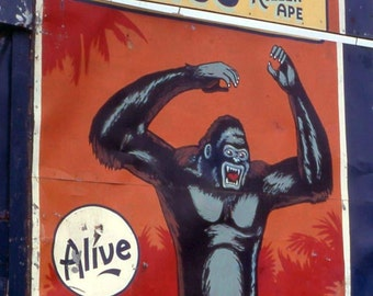 1960's era Sideshow banner King Cong Congo vintage image for framing ape