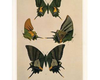 Vintage Butterfly Print Book Plate SALE~~ Buy 3, get1 free