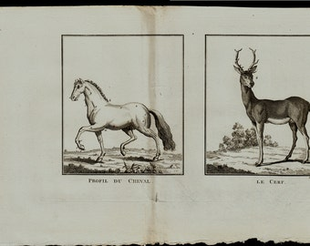 1799 Antique HORSE and DEER print, Original antique fish print, + 200 years old