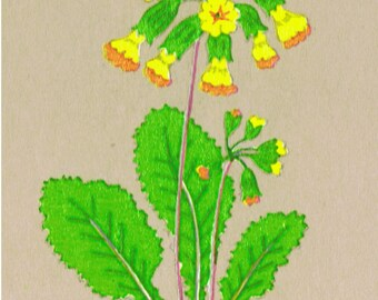 10 COWSLIPS Wild Spring Flowers (Small) Craft Jewellery Decoration DECALS Transfers Unique Retro hand-drawn