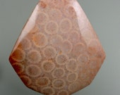Agatized Fossil Coral (Colonial) 100% Natural Hand Cut Cabochon from 49erMinerals Stock# 1470, free U.S. shipping