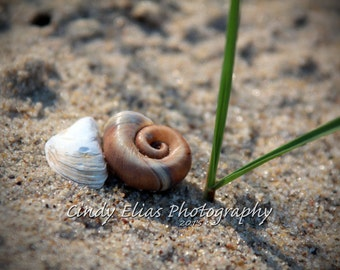 Note Card, Photo Note card, Blank Card, Stationary Card, Greeting Card, Beach Print, Photography, Beach Photography, shells, sand, gifts