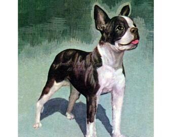 Boston Terrier Card - Dog Smiles Notecard