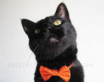 SALE!  Cat Bow Tie - Pumpkin Spice - Halloween Cat Accessory