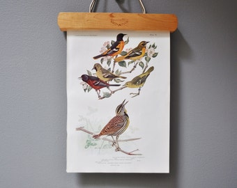Vintage Bird Book Plate - Baltimore Oriole and Meadowlark - 1940s