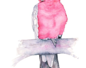 Galah watercolour painting, G11316, 5 by 7 size, Galah print, parrot watercolor painting, Australian bird watercolour, parrot painting