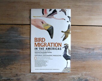 Vintage Bird Migration in the Americas Map