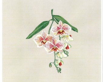 Orchid Original Painting