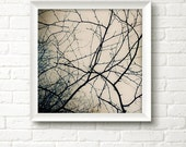 Bare tree branches art print - winter tree photo - abstract shapes, fine art home decor