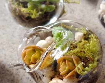 40 Miniature Terrariums Shower Favors Blown Glass Succulents