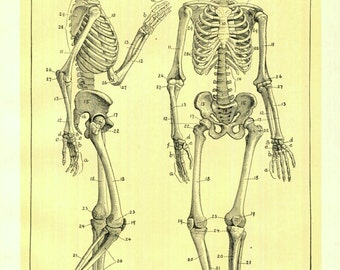 Skeleton Print Antique Book Plate Human Anatomy Medical Ephemera Wall Decor