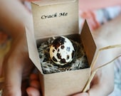 Crack Me! Pregnancy Announcement Quail Egg - Gender Reveal - Baby Shower Invitation, Custom, Personalized, Unique, Spring, 4th of July