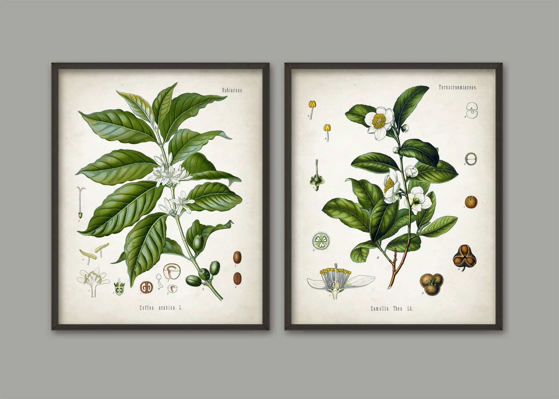 Tea and coffee wall art poster set of 2 coffee bean tea for Tea and coffee wall art