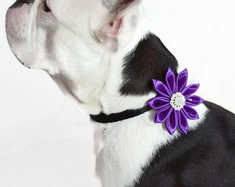 Dog Collar flowers, Dog collar, Flowers for dogs, Collar Flower, Dog Collar Flower, Dog Bow, Adjustable Collar Flowers, Dog Wedding Flower