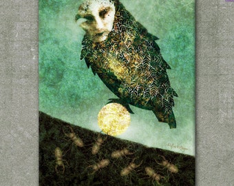 Masked Owl - Graphic - Canvas 40 x 30 cm / 15.75 x 11.81 inch - Illustration Rufus Krieger