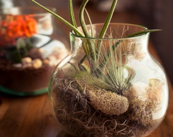 Mouth-Blown Glass Mini-Terrariums.  Hand-Crafted in Small Batches with Care by Jeff Hesselink at the Glassmaker's Bench.