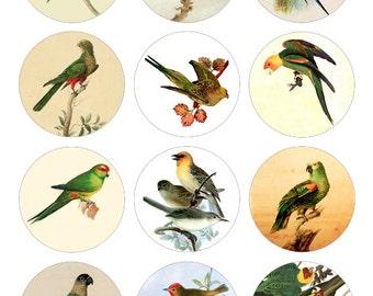 Parakeet Printable 1-Inch Circles / Bottlecap Images / Vintage Drawings of Birds / Digital Collage / Instant Download