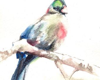 Bird painting, ORIGINAL Watercolor Turaco Bird, bird art, watercolour art