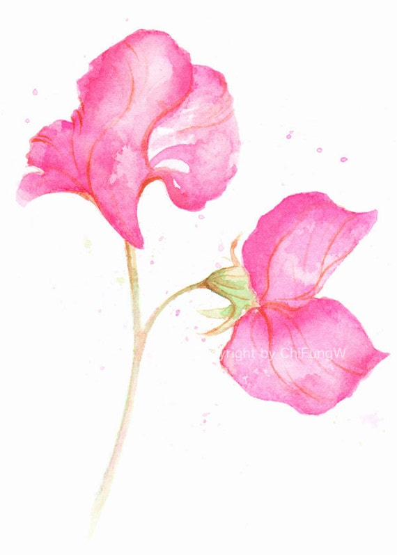 Flower, flower print, art, wall art, giclee art, watercolor giclee, watercolor art print, Pink Sweet Pea, original watercolor print