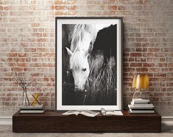 Black and white horse photography,white Horse,white horse photography,camargue horse,south of france photography,Provence,Horse wall decor