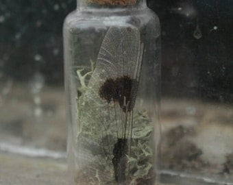 Dragonfly Wing Small Specimen Vial