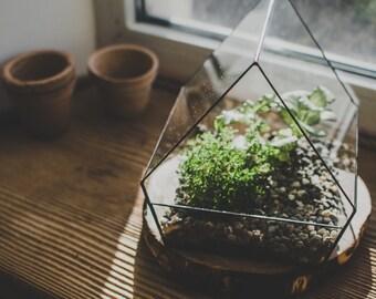 Terrarium Medium Village House, Stained glass terrarium, Flowerpot
