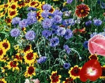 2,000 Wildflower Seeds Western Wildflower Mix Flower Seed Mix