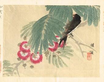 "1893, Japanese Woodblock print, antique, Kono Bairei, ""Mimosa, Barn Swallow"""