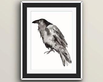 Alan - Raven ink illustration print