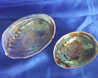 2 Aberlone Natural Whole Shells .