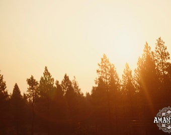 Redwood Sunrise photograph -digital download