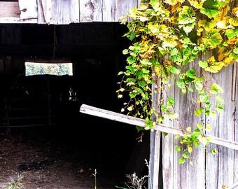 Old Barn Door Wall Art,Old Barn Door Picture,Rural Farm Photography, Farm