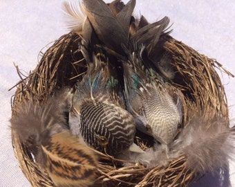 2 Birds In A Nest 4.4 Inches Scrapbooking Nest Craft Birds Small Birdsnest Bird Nest Craft Birds Nest Nr 3