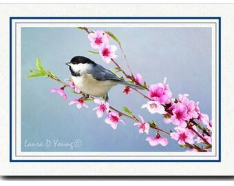 Photo Greeting Card, Photo Note Card, Handmade Card, Chickadee Bird, All Occasion Card, Peach Blossom, 5x7 Blank Card, Fine Art Print