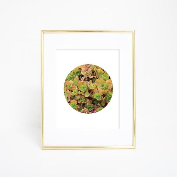 Succulent Print, Succulent Wall Art, Home Print, Downloadable Art, Printable Wall Art, Circle Print, Circle Art, Plant Art, Plant Print