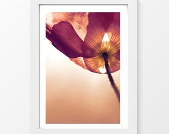 """Fascination / Poppy macro mauve low-angle shot printable art home decor downloadable art to print yourself / A3 and 11"""" x 17"""""""