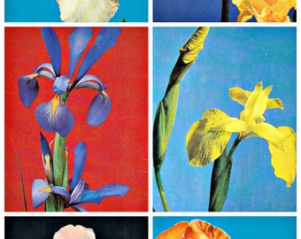 Set of 15. Soviet Postcards.  Irises. Pictures of Flowers.  Photographer Zharinova. Pravda. Moscow, 1986
