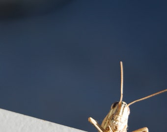 Photograph of beautiful grasshopper, insect photograph, natural life photograph, gift