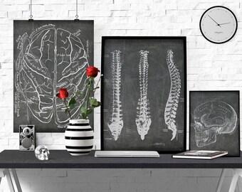 Radiology Office Art, Anatomical Skull Print, Man Cave Art, Vintage Medical Illustration, Skull Poster, Instant download, Chalkboard Anatomy