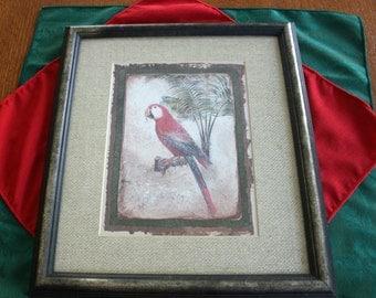 Vintage Red Parrot Print Art Professionally Framed  Artwork